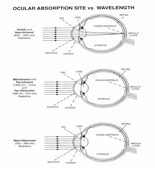Absorption of light in the eye